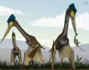 EKTE Pterosaur