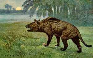 Hyaenodon_Heinrich_Harder