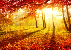 Golden Autumn Desktop Background