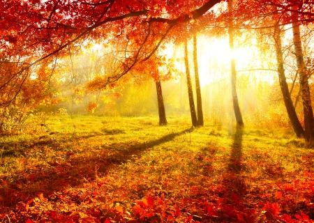 Golden Autumn Desktop Background
